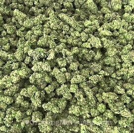 More light u003d more weed & The Best Marijuana Grow Lights azcodes.com
