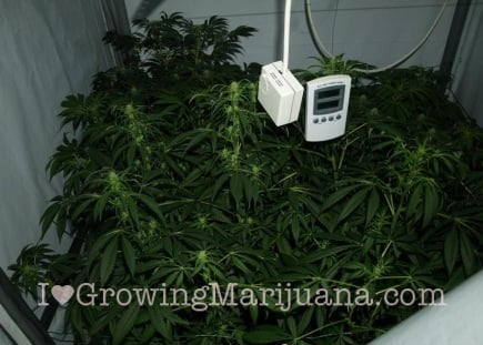 how to raise humidity in grow room