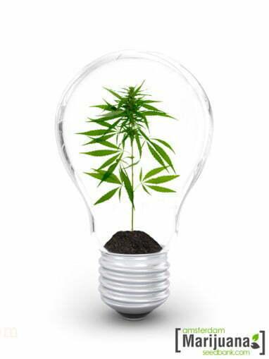 best grow lights for indoor marijuana growing. Black Bedroom Furniture Sets. Home Design Ideas