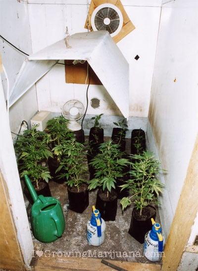 how to setup a low budget indoor marijuana garden. Black Bedroom Furniture Sets. Home Design Ideas