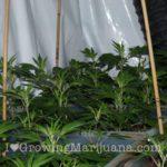 power plant grow journal cannabis