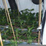 Power plant grow journal marijuana