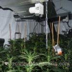 Power plant marijuana picture
