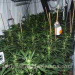 Power plant legal marijuana