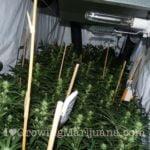 Power plant cannabis seeds