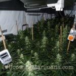 About power plant marijuana