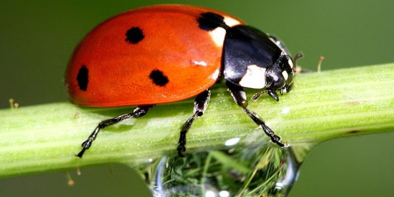 Pests And Bugs Control For Outdoor Marijuana Plants