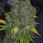 I love cannabis pictures