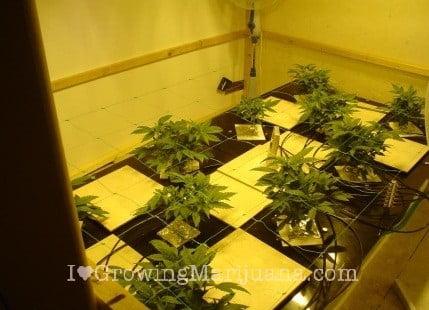 how to build a marijuana hydroponics settup