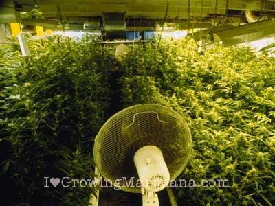 how to start growing marijuana indoors