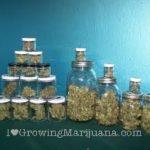 Cannabis airtight jars