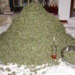 Dry cannabis buds