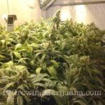 How to grow marijuana with co2