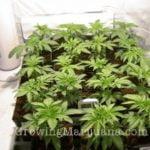 Indoor growing options weed