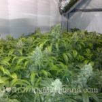 Carbon dioxide indoor weed