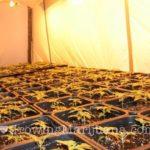 Indoor cannabis growroom