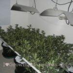Vinegar baking soda co2 generator marijuana