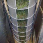 Harvest indoor marijuana