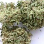 Dry cannabis freezer