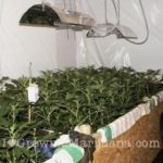 Weed cuttings