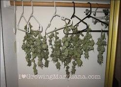 Materiel cannabis interieur - Tuto culture indoor ...