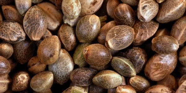 Choosing the best seeds to plant