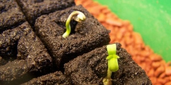 Grow weed from seeds