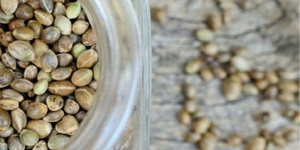 Preserve and treat cannabis seeds with extra care