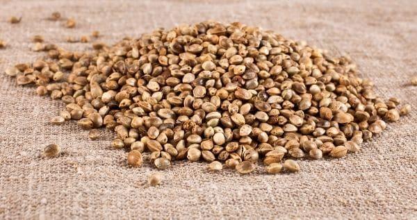 Recognize Quality Marijuana Seeds