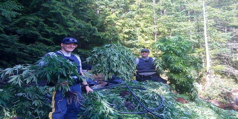 Security When Growing Marijuana