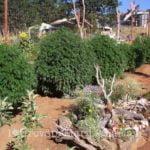 I love marijuana fertilizers