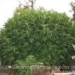 I love marijuana nutrients fertilizers