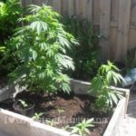 Soil weed outdoor