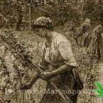 History medicinal cannabis