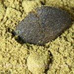 Hash powder