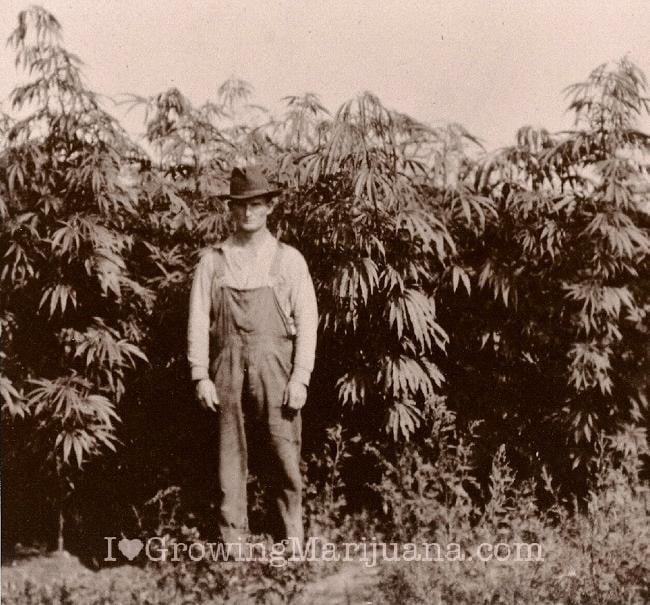 external image 06-history-medical-marijuana-farmers.jpg