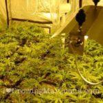 Marijuana electricity setup