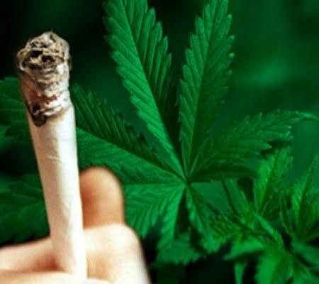 Cannabis tolerance