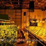 I love cannabis electricity