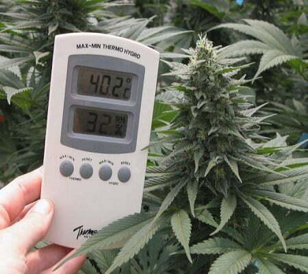 Growing Medical Marijuana Indoors