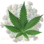 I love marijuana aids hiv