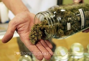 I love marijuana overdose and treatment