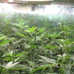 I love marijuana reflective material