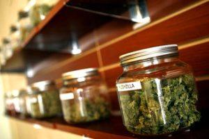 Huge increase in cannabis dispensaries