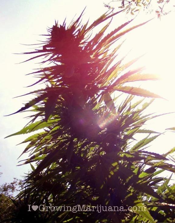 I love marihuana luz exterior