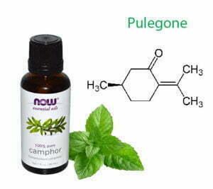 Pulegone in cannabis
