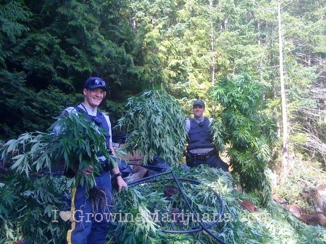 I love marihuana seguridad