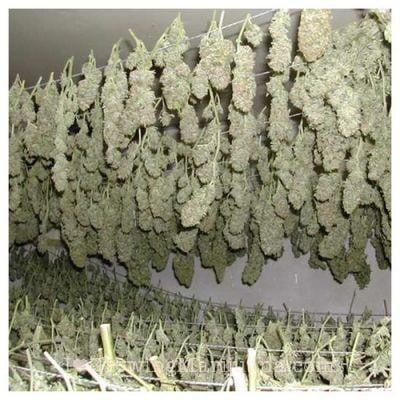 I love marihuana secado