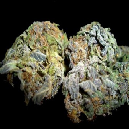 Blueberry review