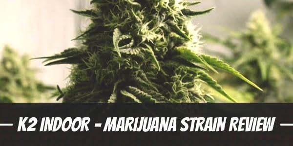 K2 Indoor – Marijuana Strain Review